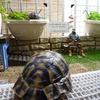 パトロ~ル途中の、シバパパの眺めている先は、、、