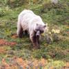 【大自然への切符を求め交渉】アラスカ旅行記Part2~デナリ国立公園編~