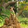 山口県宇部市「ときわ動物園」野生動物の生息環境を再現、生き生きした動物達