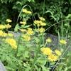 神代植物公園のミソハギ、夏の山野草など。