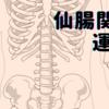 仙腸関節の運動②
