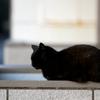 猫にも 国産、無添加のキャットフードが安心・安全
