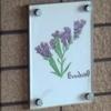 スターチスの別名は永遠の花everlasting flower