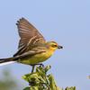 幌延へ行こう【2】サロベツ原野の鳥とアトリエ華