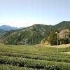 上河内地区でも山桜が見頃になりました