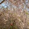 登山学校 実技講座「春から始める登山!/岩石山(454M がんじゃくさん)」レポート