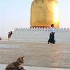 ミャンマー旅のあれこれ【動物編】犬と猫のいる風景