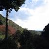 岩尾の滝( 山口県柳井市神代)