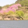 由利本荘「春の花巡り」東由利「黄桜まつり編」④(全5回)