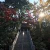 【群馬 達磨寺/高崎市】紅葉が必見のお寺(御朱印有り)