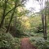 「野幌森林公園」紅葉具合を見に行く