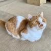 室内育ちの愛猫は網戸のカナブンよりおもちゃの方が好きみたい。