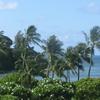 カウアイ島+ホノルル旅行 4日目 ホノルルへ移動
