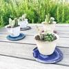 夏のインテリアにおすすめの植物!