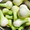 玉ねぎ収穫と今年の家庭菜園