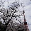 駅からハイキングで港区の寺社巡り 桜と、お守りと♪