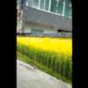 【神業】ホンモノと錯覚するレベルの壁画がヤバいwwwww