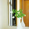 IKEAの花瓶にホワイトのルリマツリで玄関を涼しげに♪ 一枝だけの簡単アレンジ♪