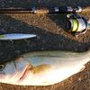 夜のスズキ漁 Part8 GET🐟