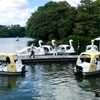 スワンボートにアオサギ、ホタルも舞う洗足池公園。