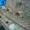 ウッドデッキ 散水栓を立水栓へ