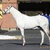 2022年新種牡馬:レッドファルクス