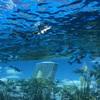 【日記】サンシャイン水族館に空飛ぶペンギンを見に行き癒される