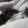 人と猫の冬支度とアレルギー対策【北海道】