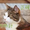 猫の体内時計はとっても正確!ごはんの時間はピッタリと覚えています