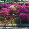 福井のツツジの名所『西山公園』へロードバイクでお出かけ