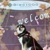 【犬連れ旅】やまとちゃんビワドッグへ!