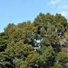 香取神社の梅まつり