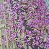 ほとばしる山茶花の花庭染めし