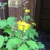 墨田区 向島百花園の植物たち