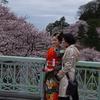 金沢の桜は満開「記念撮影」