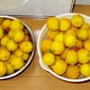 収穫レモンの加工