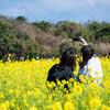 リーフでおでかけ  伊良湖菜の花ガーデン 菜の花まつり【東海エリア】