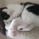 今日の黒猫モモ&白黒猫ナナの動画ー822