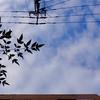 作曲工房 朝の天気 20108-11-14(水)埼玉県民の日 晴れ