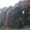 磯子高校の森に、11月の初雪と積雪