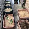 もみ殻堆肥の様子