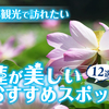 夏の京都観光で訪れたい蓮(ハス)が美しいおすすめスポット12選