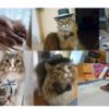 【まとめ記事】猫との生活日記