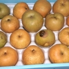 かわちばんかん10kg+梨4.5kgが届きました。一人暮らしなのに(^^;
