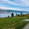 その1 | カナダワインの産地オカナガンバレーワイナリー巡り