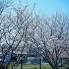 特養月華苑「菜の花棟4月ブログ」