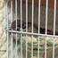 スズメと化学物質 動物病院のアドバイス4