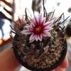 昇竜丸の花が咲いた