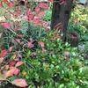 淡い秋色の葉っぱと綺麗な小石