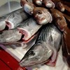 漁港直送の魚たち!鹿児島指宿から